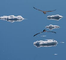 Antarctic Skua amongst the ice clouds by David Burren