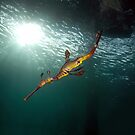Seadragons & Sunshine by MattTworkowski