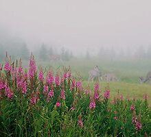 Fireweed deer pasture by MooseMan