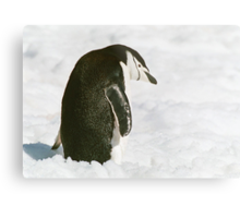 Chinstrap Penguin In The Snow Metal Print