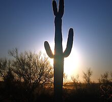 Saguaro Sunset by Chelsea Brewer