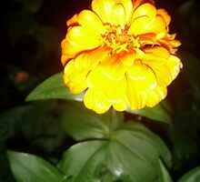 Glowing Marigold by tastypaper