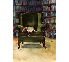 Monkey's Library Photographic Print