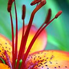 """""""Colors of nature"""" by Sabine Fink"""