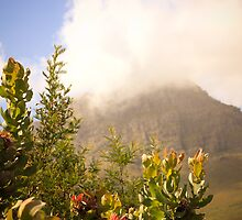 Of moutains and proteas by karinstruwig
