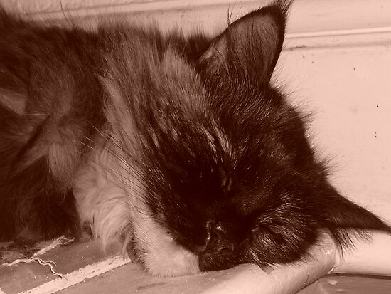 Tired Kitty in Sepia by karenuk1969
