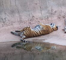 Tiger Reflections by justbyjulie