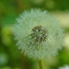 blowball by arcus
