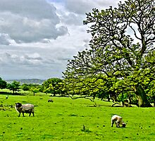 Rivington Pastureland by Mal Firth