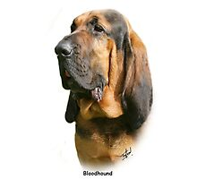 Bloodhound Photographic Print
