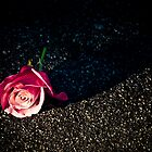 Second Rose by Ariston Collander