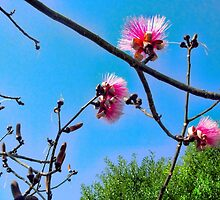 Shaving Brush Tree 8 by GolemAura