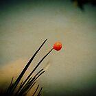 Nature by lumiwa