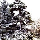 Tree of Snow by swagman