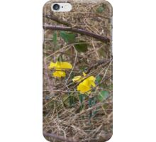Blooming in a tough environment  iPhone Case/Skin