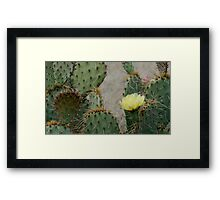 Prickly Pear Finery Framed Print