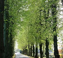 Lime Avenue by John Keates