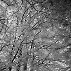 Snow branches by Gordon Brebner
