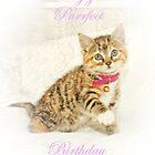 Happy Birthday by Catherine Hamilton-Veal  ©