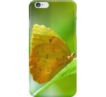 Yellow Orange Butterfly on Lime Leaf in Costa Rica Rainforest iPhone Case/Skin