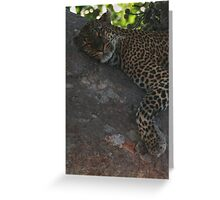 Bella The Leopard  Greeting Card