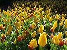 Yellow Tulips by Michelle Cocking