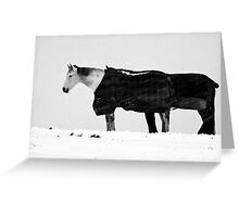 Two Horses In Blizzard Greeting Card