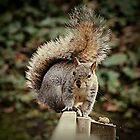 A Squirrels Tail by Ladymoose