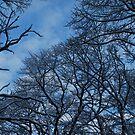 Woods of Magnolia NJ by Jeff Stroud