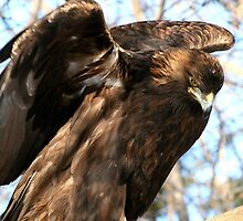 THE GOLDEN EAGLE by Larry Trupp