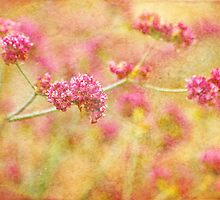 Spring Dreams by Colleen Farrell