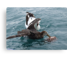 Albatross Assault Canvas Print