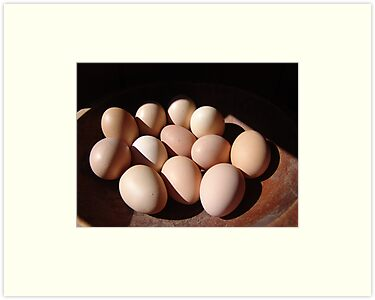 Fresh eggs by May Lattanzio