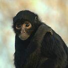 Spider Monkey 2 by Franco De Luca Calce