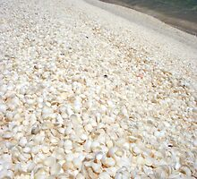 """Shell Beach II"" Shark Bay, Western Australia by wildimagenation"