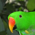 Male Eclectus Parrot by Marilyn Harris