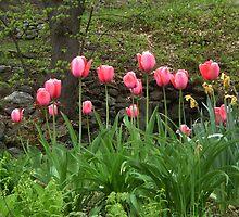 Spring Tulip Garden  by clizzio