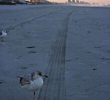 Why the Sea Gull Shouldn't Have Crossed the Road... by Victoria DeMore