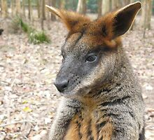 I wonna be a wallaby, I am by Heinz
