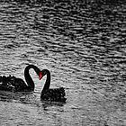 Love Is In The Air by wallarooimages