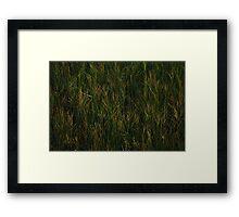 Green. Framed Print