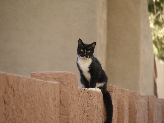 Neighborhood Cat by down23