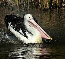 Pelican Splash III by Tom Newman
