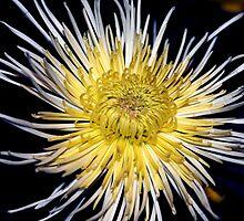 Big Bang by Anne Smyth
