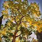 Autumn Tree by Les Meehan