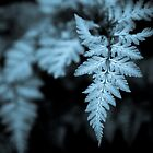 fern cyanotype by horus40