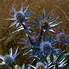 Sea Holly by horus40