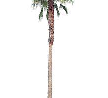 Lonely Palm by dandouna321