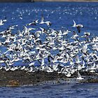 Fly away gulls by unozig