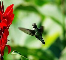 hummingbird and red flower by oneti134